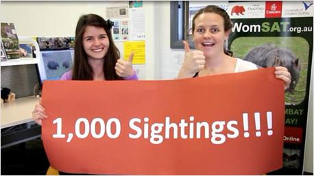 Innerhalb von 6 Monaten wurden 1.000 Wombats gesichtet und vermerkt. Jetzt, nur einen Monat später, sind es schon über 2.000!