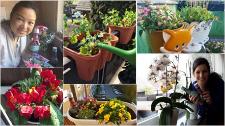 Viele trnd-Partner kümmern sich besonders gern um ihre Pflanzen.