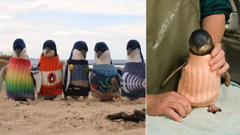 Diese Pullover stehen nicht nur den Plüsch-Pinguinen, die sie tragen. Sie haben auch eine nützliche Funktion (Bilder: penguinfoundation.org.au).
