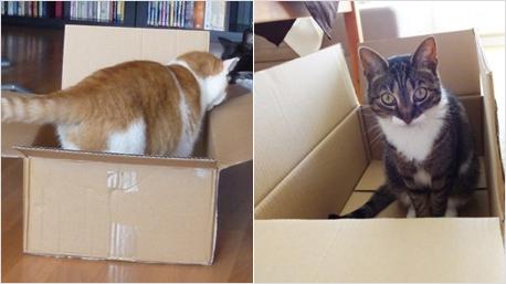 Katzen in trnd Startpaketen
