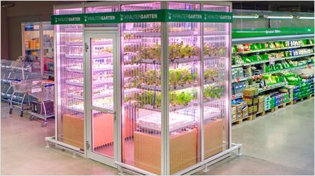 Kräuter und Salate im Supermarkt