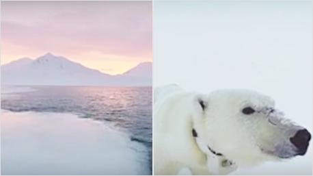 Virtuelle Reise in die Arktis.