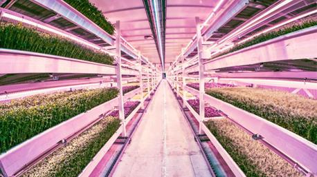 """Unterhalb des Londoner Stadteils Clapham baut  """"Growing Underground"""" (engl.: Pflanzen im Untergrund)  gesunde Nahrungsmittel an. (Bild: pinterest)"""