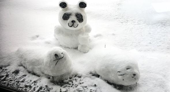 .. Panda und Robben im eigenen Garten? (Quelle: Twitter/@totubo6963)