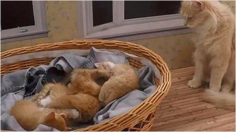 Katzenmutter Vanilla wacht über ihren Nachwuchs.