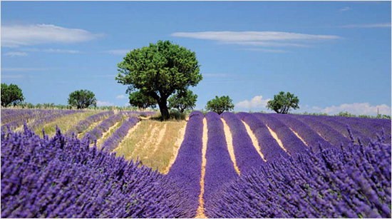 … beruhen auf der Küche und dem Lebensgefühl der Provence, einer Region in Frankreich. Das Cantadou Produktsortiment ist besonders vielseitig und …