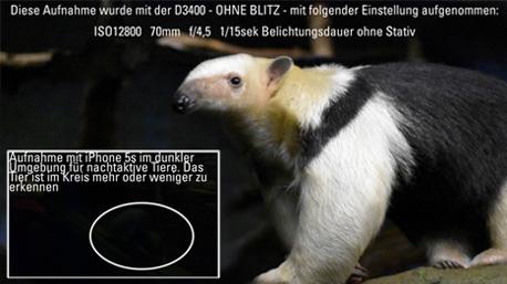 Wie beeindruckend die Ergebnisse mit der Nikon D3400 bei Dunkelheit sind, stellt trnd-Partner Weazl bei einem Zoobesuch fest.