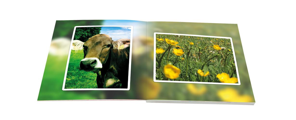 Gleichzeitig bietet es gewohnte FotoPremio Qualität mit hoher Farbbrillanz und Detailtiefe, da es auf Marken-Fotopapier belichtet statt gedruckt wird.