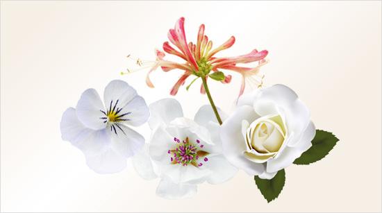 Die Herznote von WOMAN offenbart den eigentlichen Charakter des neuen Duftes. Er ist einem weißen Blumenbouquet mit sanften Magnolien nachempfunden.