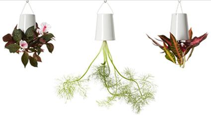 blumentopf berkopf. Black Bedroom Furniture Sets. Home Design Ideas