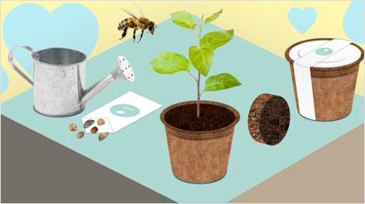 Kompostierbarer Blumentopf