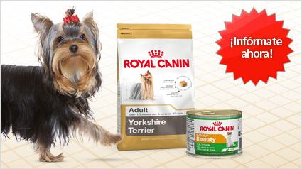 nuevo proyecto royal canin yorkshire terrier. Black Bedroom Furniture Sets. Home Design Ideas