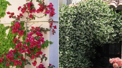 Plantas trepadoras para trnd for Fachadas con plantas trepadoras