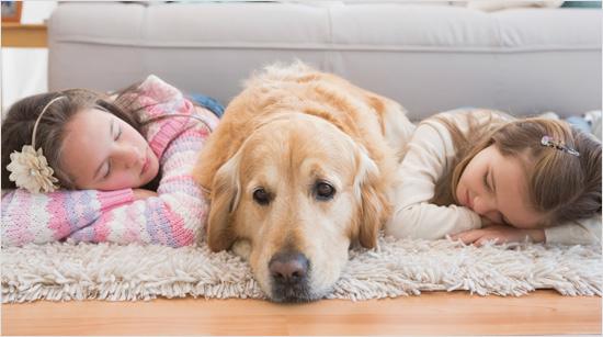… incluso los causados por los animales, para ofrecernos un hogar fresco y aromatizado.