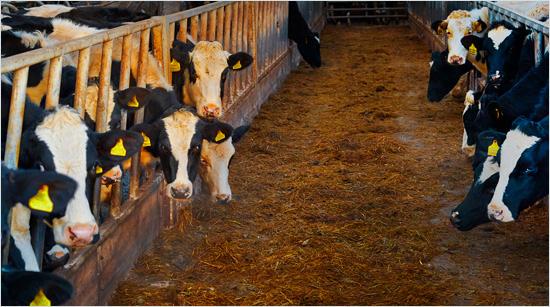 … todos ellos elaborados con ingredientes 100% naturales y la mejor leche fresca danesa.