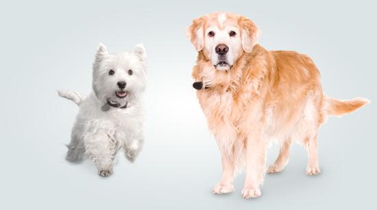 … que aportan una mezcla perfecta para una dieta completa y equilibrada para perros de todos los tamaños.