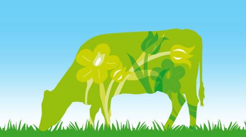 … el ganado se alimenta con semillas de lino y hierba joven de primavera, que tiene una composición ideal gracias a su alto porcentaje en lípidos, principalmente del tipo omega-3 y omega-6, que previenen las enfermedades cardiovasculares.