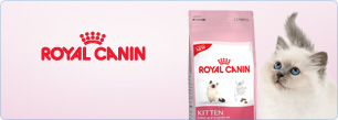 Blog Royal Canin Kitten