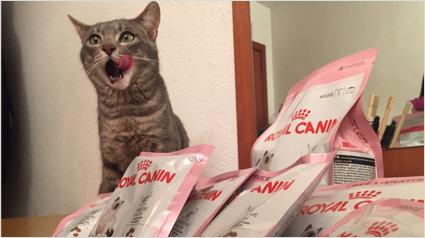 trnd_marketing_participativo_primera_opinion_royal_canin_kitten