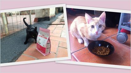 trnd_marketing_participativo_carcteristicas_royal_canin_kitten