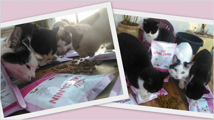 trnd_marketing_participativo_merienda_royal_canin_kitten