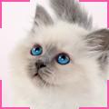 trnd_marketing_colaborativo_royal_canin_kitten_internet