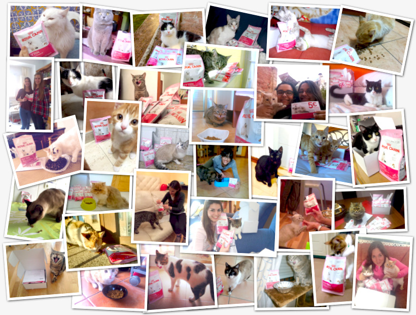 collage-royal-canin-kitten