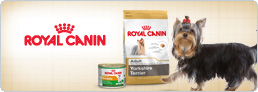 Blog Royal Canin Yorkshire Terrier