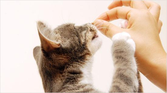 Los premios son una buena opción para conectar y acercarnos más a nuestras mascotas. Y como están elaborados específicamente para gatos, además de premiarles, son saludables para ellos.
