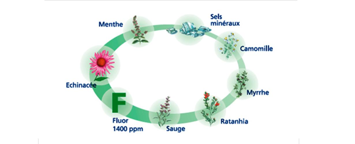 <CENTER>Une formule unique qui aide à arrêter et prévenir le saignement occasionnel des gencives à base de bicarbonate de sodium et de 6 extraits naturels de plantes.<CENTER>