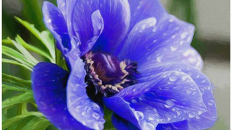 Gli anemoni esprimono speranza e attesa.