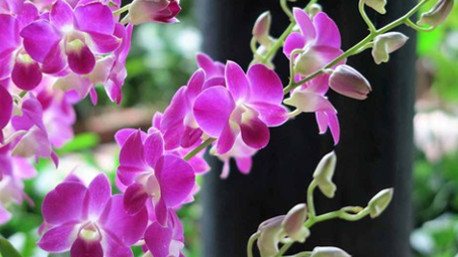 L'orchidea indica un amore completo, di cui dovremo prenderci cura.