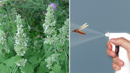 do it yourself thursday natuurlijke anti muggen spray