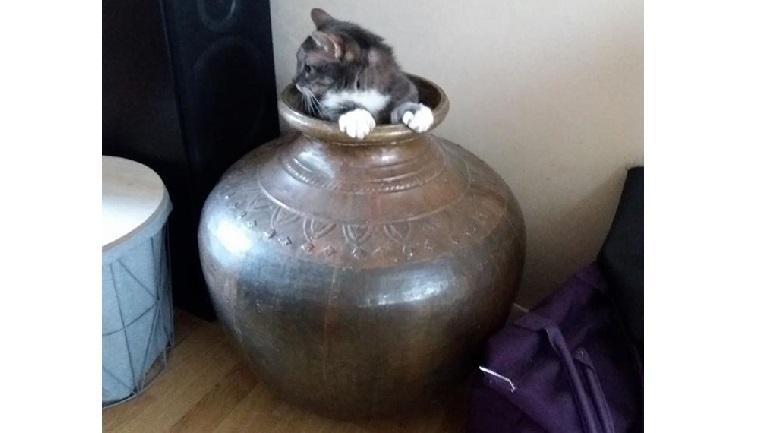 De kat van trnd-partner deedee77 speelt verstoppertje!