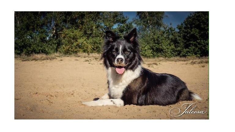 De hond van trnd-partner KellyMS heeft heerlijk zand lopen happen ...