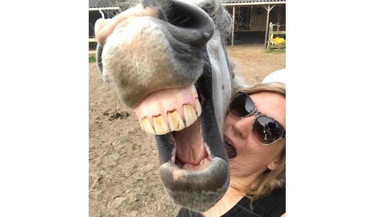 Het paard van trnd-partner Silvana- poseert graag voor een selfie!