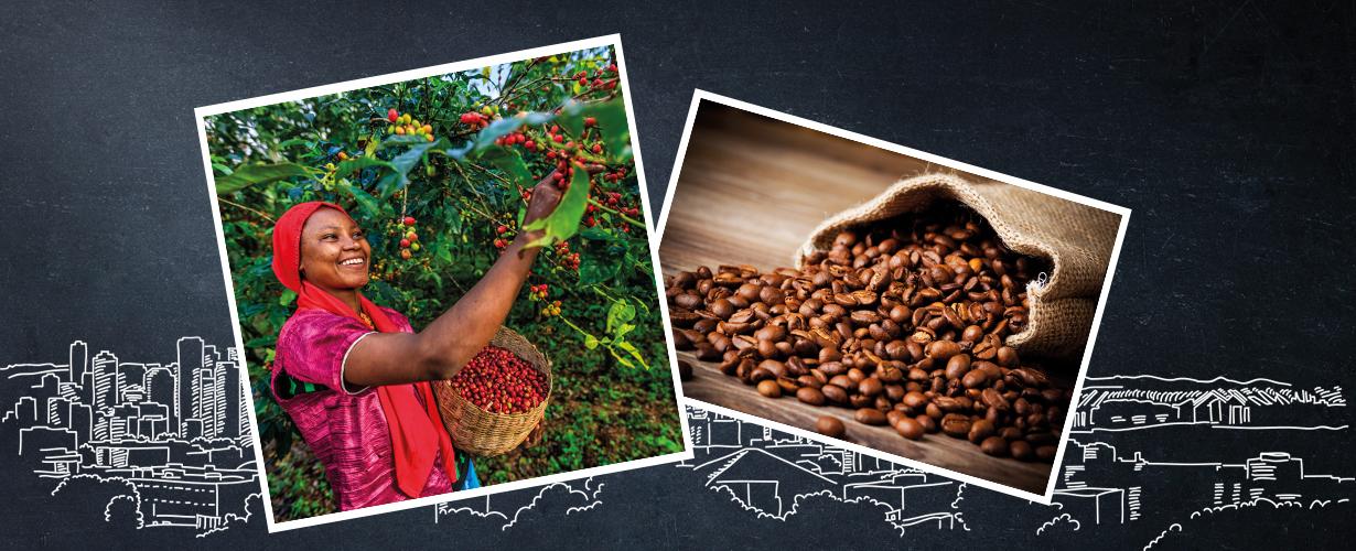 Starbucks doet er alles aan om de koffie zo duurzaam mogelijk te maken. Ook werkt Starbucks …