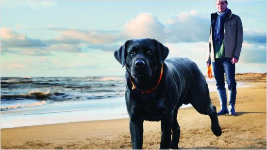 ...która przeznaczona jest dla psów dorosłych ras średnich!