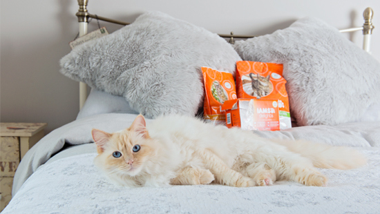 2,000 lucky cats will get to try IAMS ProActive Health for free, while you feed your honest opinions straight back to the folks at IAMS and share cute pictures of your furry friend enjoying their new food!