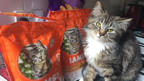 Healthy happy cat